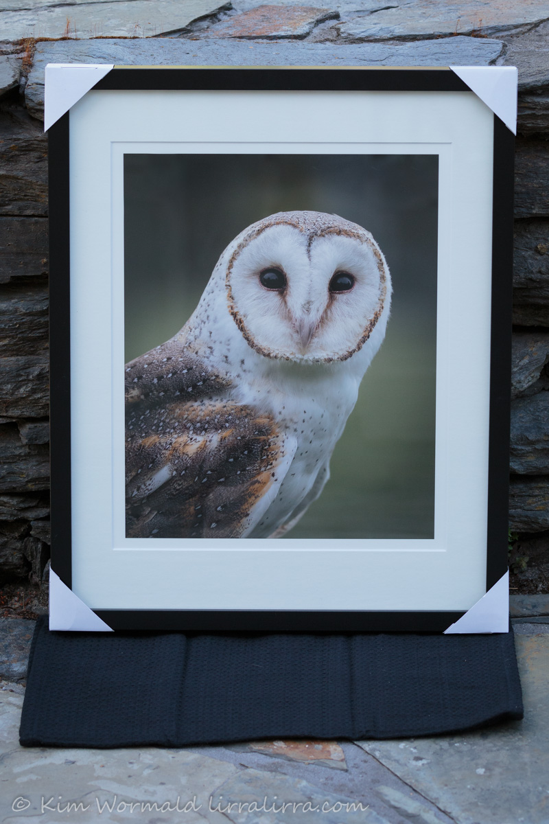 barn-owl-framed-kim-wormald